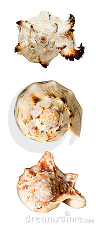 Collage with seashells