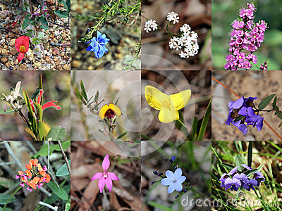 Collage of  South West Australian Native Plants