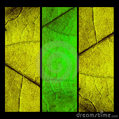 Collage with three mapple leafs