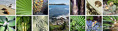 Collage, Tropical Images