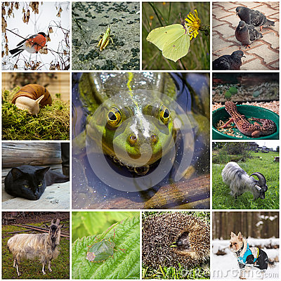 Free Collage With Animals Stock Photo - 52654340