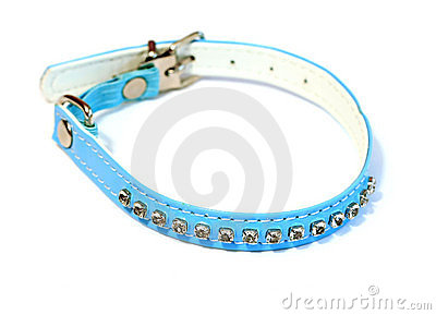 Collar for dogs isolated on white
