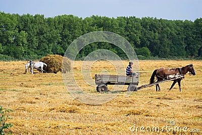 Collect a haystack