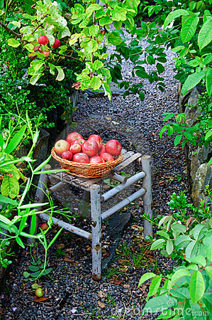 Free Collecting Apples In A Garden Stock Images - 15861614