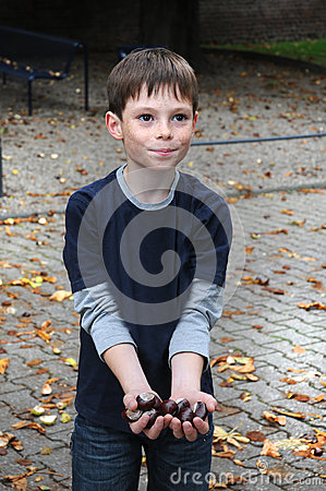 Free Collecting Chestnuts Royalty Free Stock Photo - 27239435