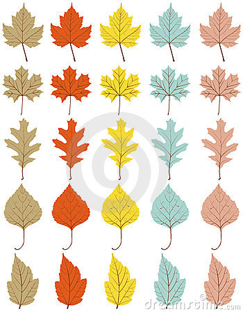 Collection of 25 different autumn leaves