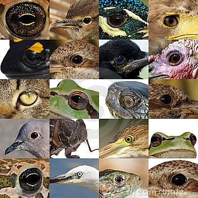 Collection of animal eyes