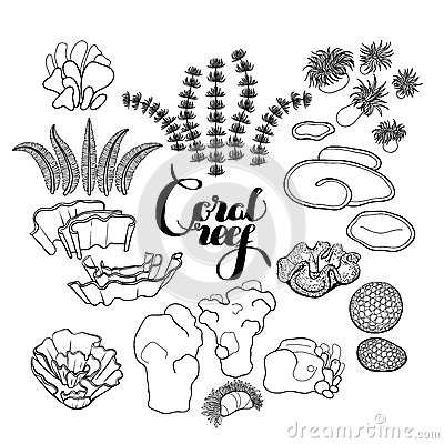 Collection of coral reef elements stock vector image for Ocean plants coloring pages