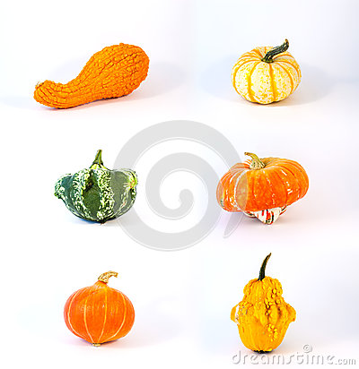 Collection of cucurbit