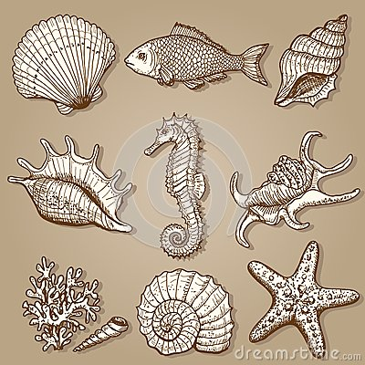 Collection de mer. Illustration tirée par la main originale