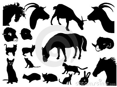Collection of domestic animals