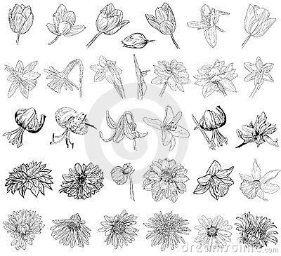 Collection of floral sketches