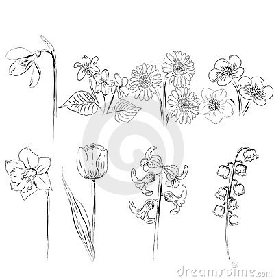 Collection of flower sketches