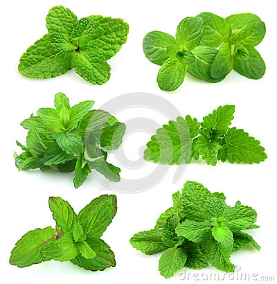 Free Collection For Fresh Mint Royalty Free Stock Image - 24984596