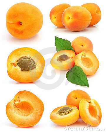 Collection of fresh apricot fruits isolated