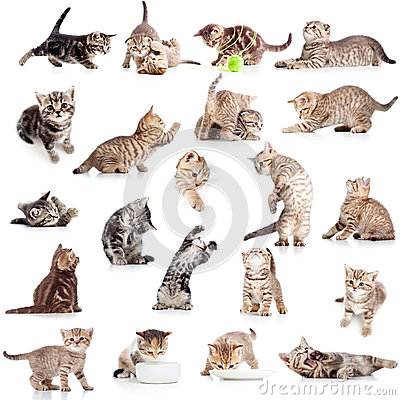 Collection of funny playful cat on white