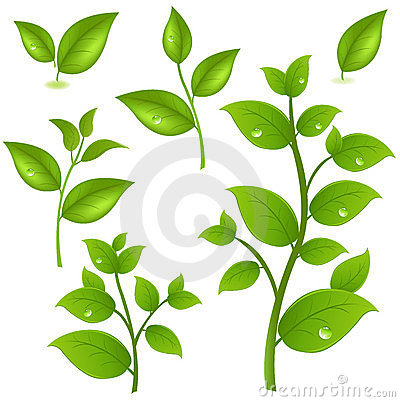 Collection Of Green Branches. Vector