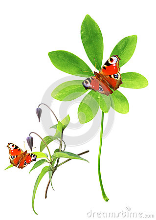 Collection of green leaves and butterfly