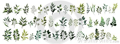 Collection of greenery leaf plant forest herbs tropical leaves Vector Illustration