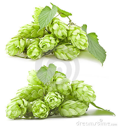 Collection of hops
