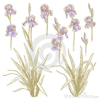 Collection of iris flowers