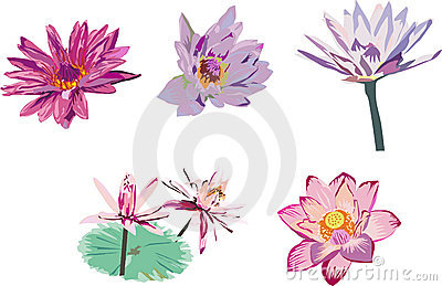 Collection of lotus