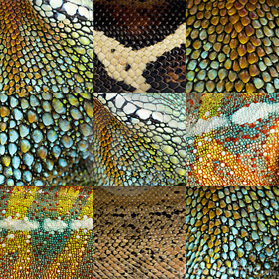 Collection of nine colorful reptile skin