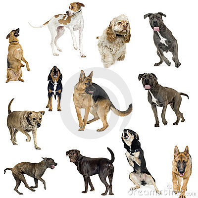 Free Collection Of 12 Dogs In Different Positions Stock Photo - 3752620