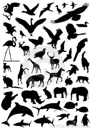 Free Collection Of Animal Vector 2 Royalty Free Stock Images - 3665879