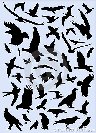 Free Collection Of Birds Vector Stock Photo - 3590750