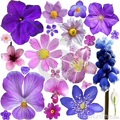 Free Collection Of Blue, Purple Flowers Stock Photos - 42428923