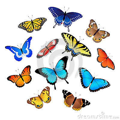 Free Collection Of Butterflies Royalty Free Stock Images - 25080989