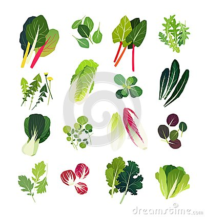 Free Collection Of Common Leafy Greens Stock Images - 101380674