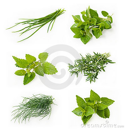 Free Collection Of Fresh Herbs Royalty Free Stock Images - 15341479