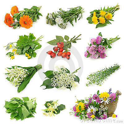Free Collection Of Fresh Medicinal Herb Stock Image - 14974381