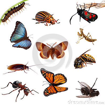 Free Collection Of Insects. Butterflies, Caterpillars, Stock Photos - 33565243