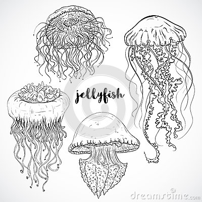 Free Collection Of Jellyfish. Vintage Set Of Black And White Hand Drawn Marine Fauna.  Vector Illustration Stock Images - 61169334