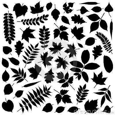 Free Collection Of Leaf Silhouettes Royalty Free Stock Photo - 16399195