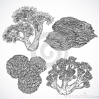 Free Collection Of Marine Plants And Corals. Vintage Set Of Black And White Hand Drawn Marine Flora. Royalty Free Stock Photo - 62028265