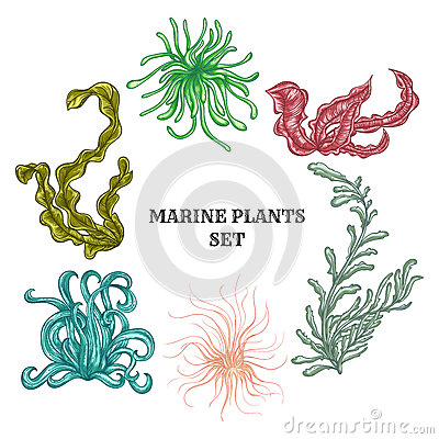 Free Collection Of Marine Plants, Leaves And Seaweed. Vintage Set Of Colorful Hand Drawn Marine Flora. Royalty Free Stock Images - 59758769