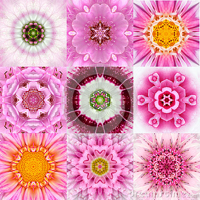 Free Collection Of Nine Pink Concentric Flower Mandalas Kaleidoscope Royalty Free Stock Images - 51984489