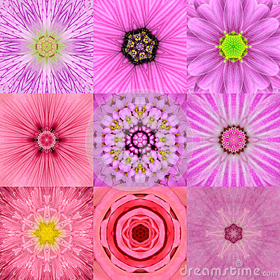 Free Collection Of Nine Pink Concentric Flower Mandalas Kaleidoscope Stock Images - 53443774