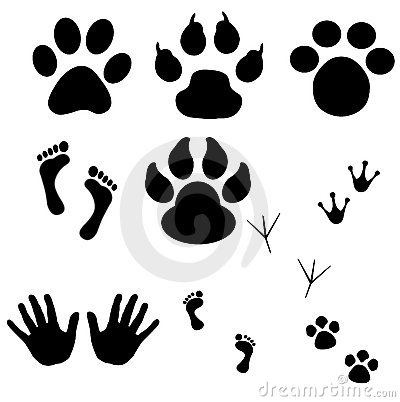 Free Collection Of Prints (vector) Royalty Free Stock Image - 10980876