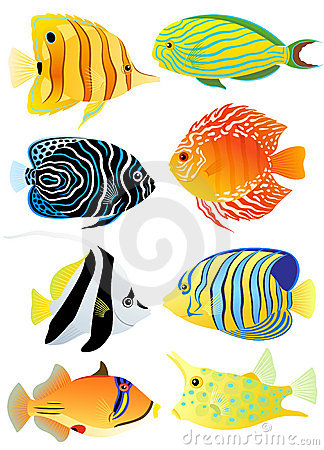 Free Collection Of Tropical Fish Royalty Free Stock Photography - 20715937