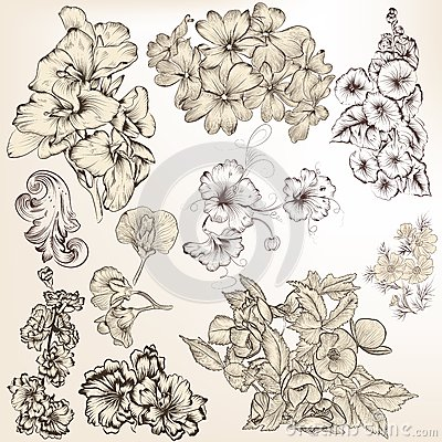 Free Collection Of Vector Detailed Hand Drawn Flowers For Design Stock Photos - 33432573