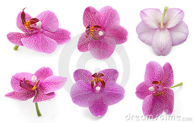 Collection orchid