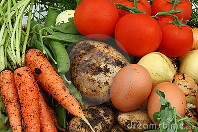 Collection of organic vegetables and eggs