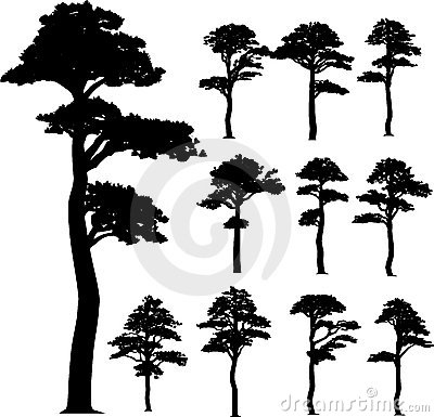 Collection (pine) vector trees