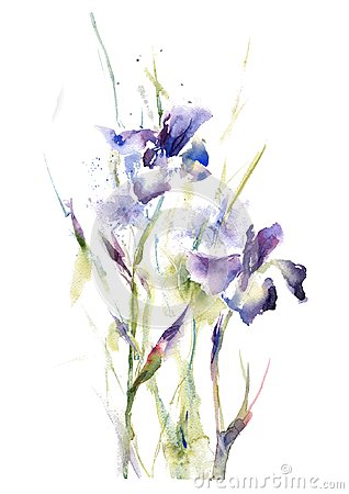 Collection watercolor hand drawing summer iris flowers bouquet Stock Photo