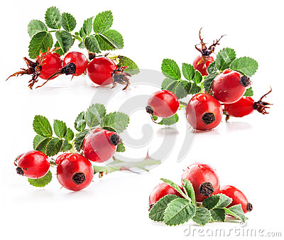 Collection of rose hips